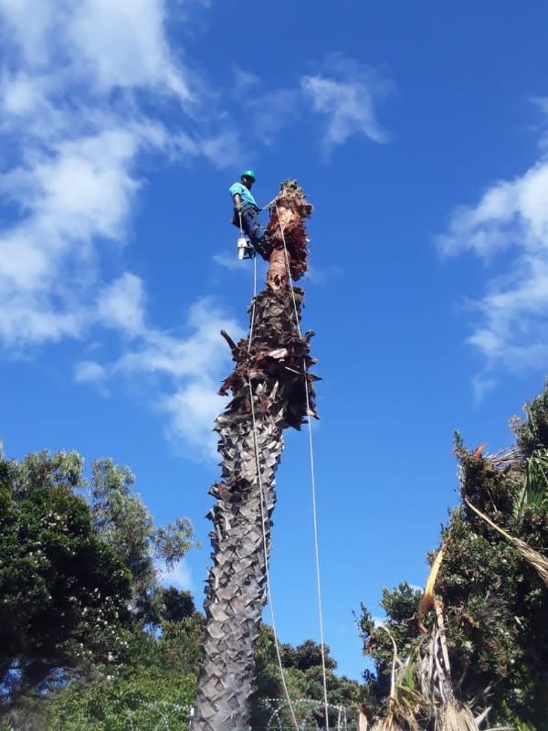 Stm_treefellers _palm tree_600x800.