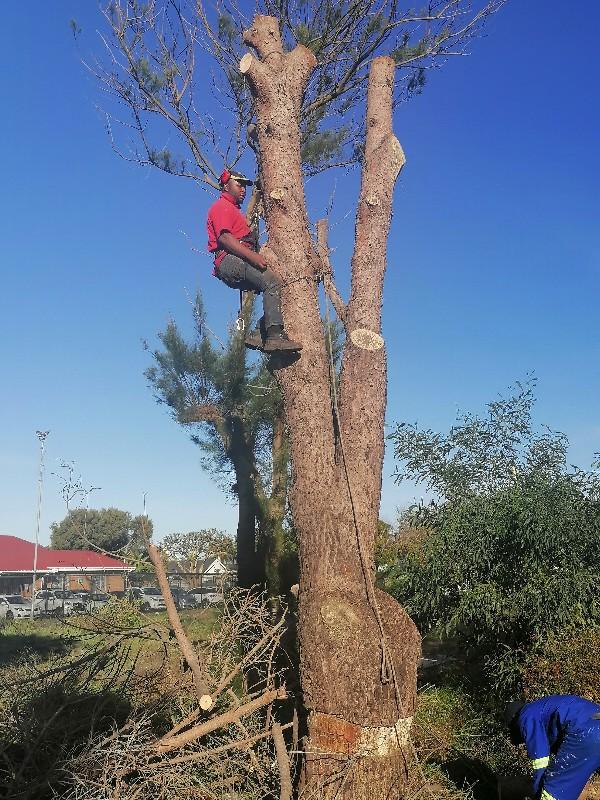 STM Tree Fellers _tree cutting down_600x800